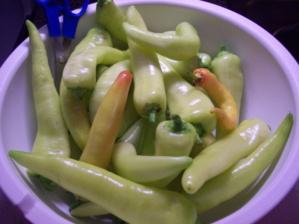 One harvest from Banana peppers grown in a 5 gal bucket