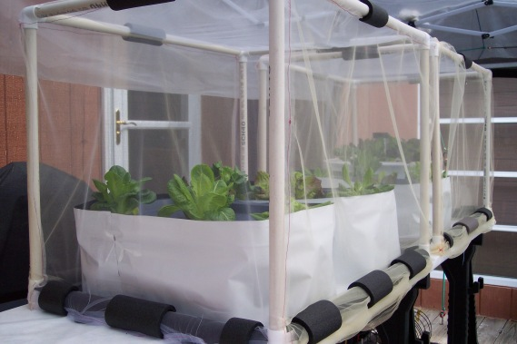 Hydroponic lettuce starting to grow- outside on the deck, in PVC cages with netting covers and plastic canopy over all