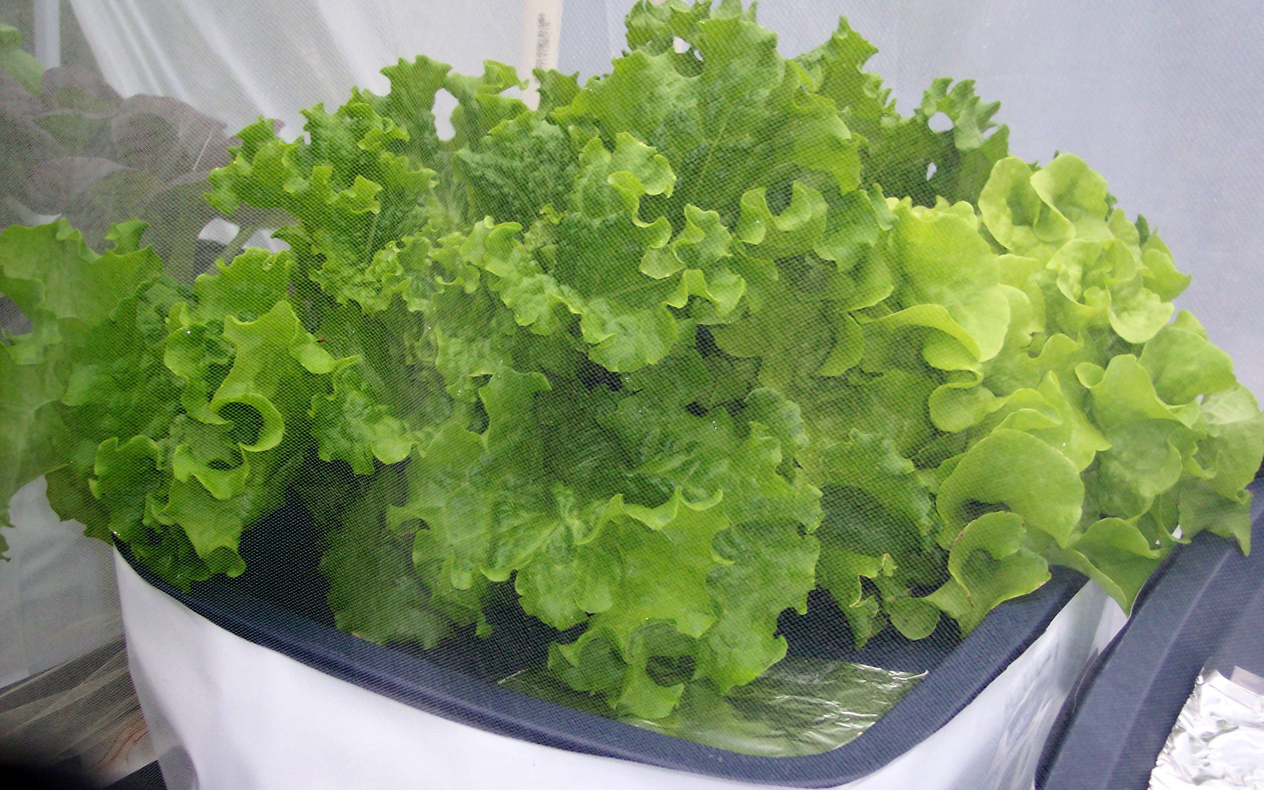 Vegetable gardening hydroponic videos photos posts livin small - Hydroponic container gardening ...